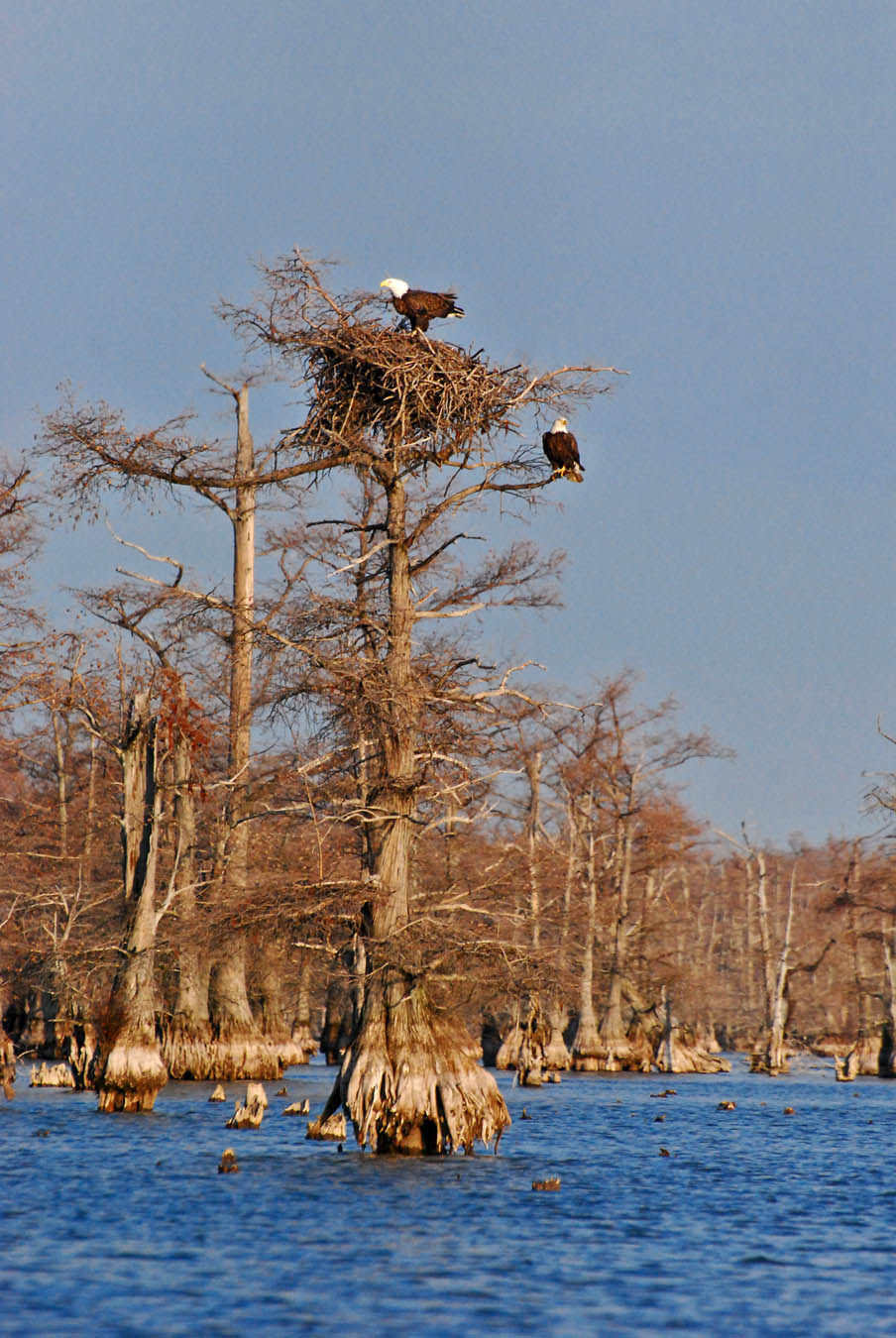 Reelfoot Lake Tennessee Map.Tennessee Outdoors